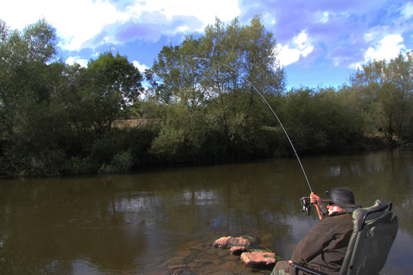 Playing a double figure barbel