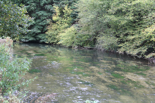River Itchen crystal clear